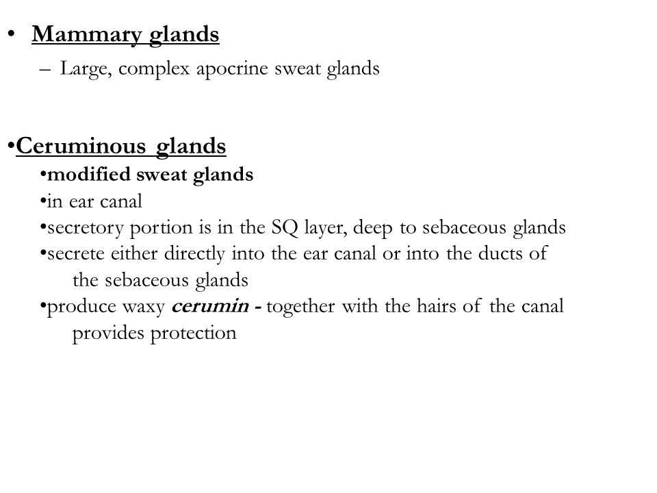 Mammary glands Ceruminous glands Large, complex apocrine sweat glands