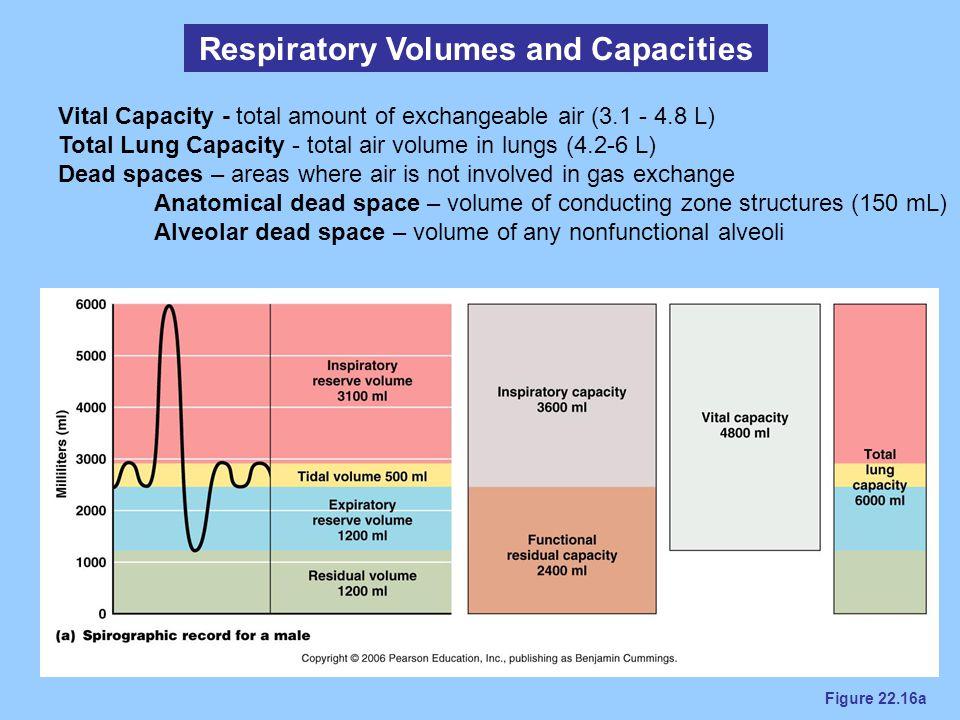 Respiratory Volumes and Capacities