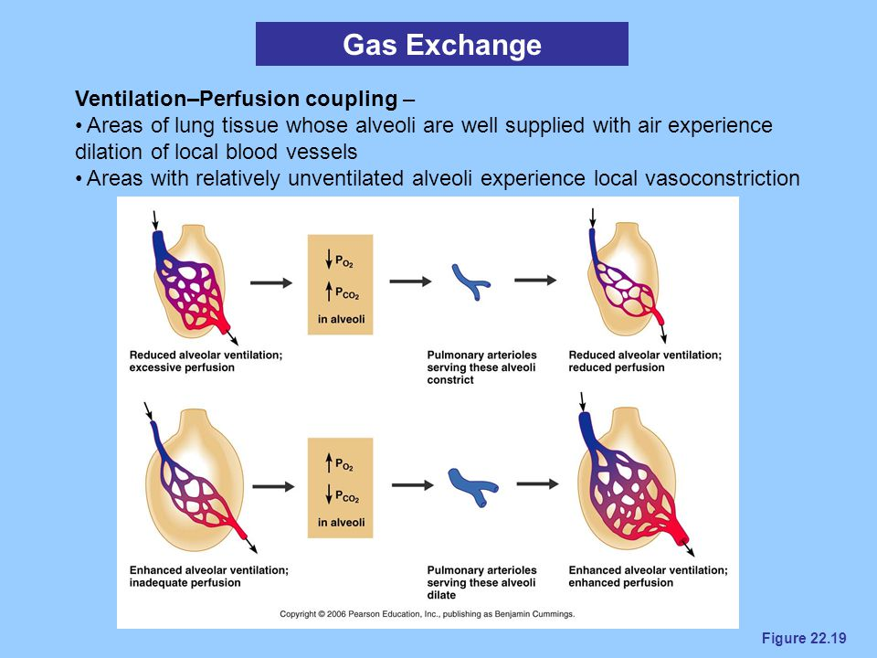 Gas Exchange Ventilation–Perfusion coupling –