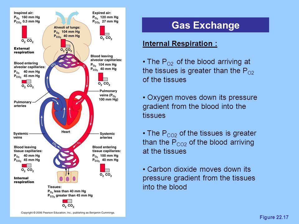 Gas Exchange Internal Respiration :