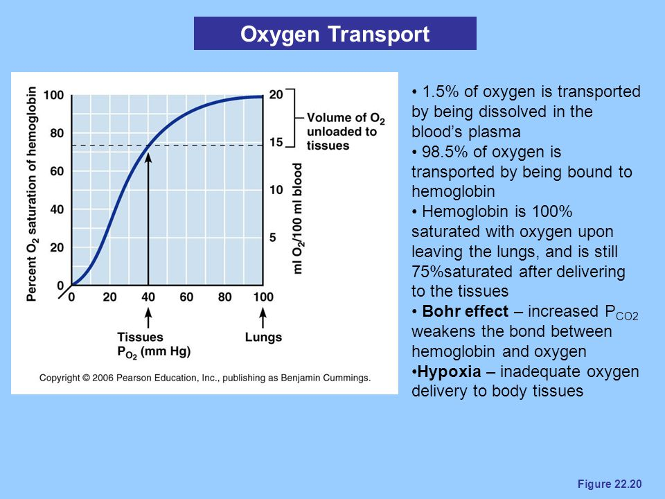 Oxygen Transport 1.5% of oxygen is transported by being dissolved in the blood's plasma. 98.5% of oxygen is transported by being bound to hemoglobin.