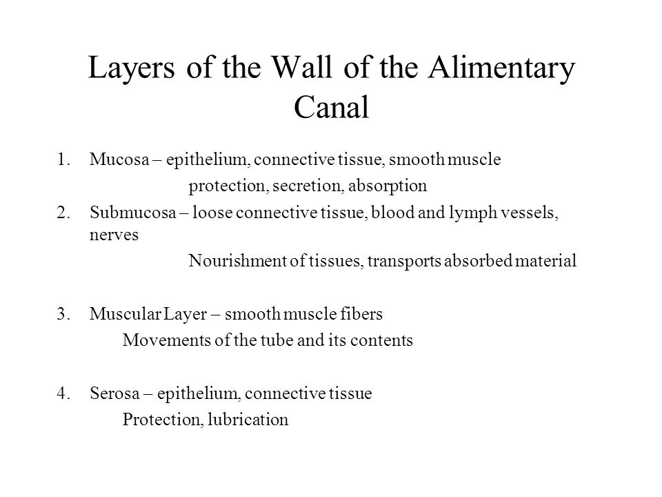 Layers of the Wall of the Alimentary Canal