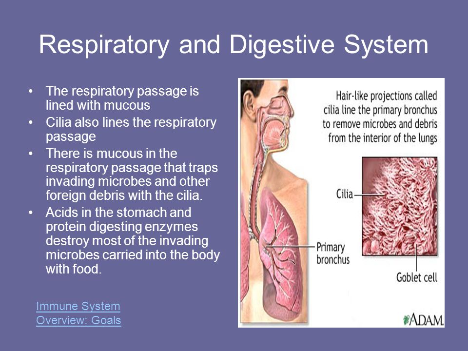 Respiratory and Digestive System