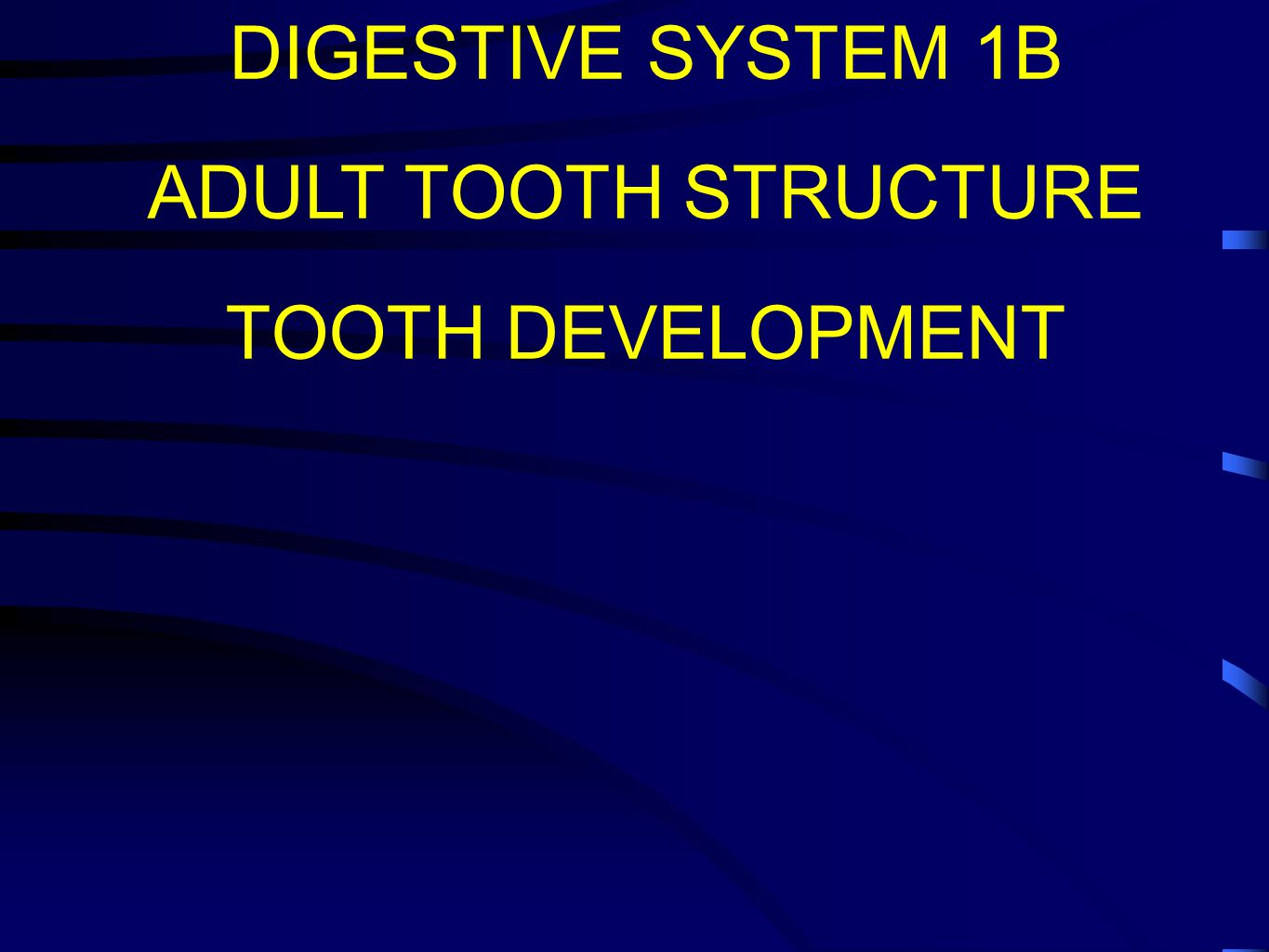 DIGESTIVE SYSTEM 1B ADULT TOOTH STRUCTURE TOOTH DEVELOPMENT