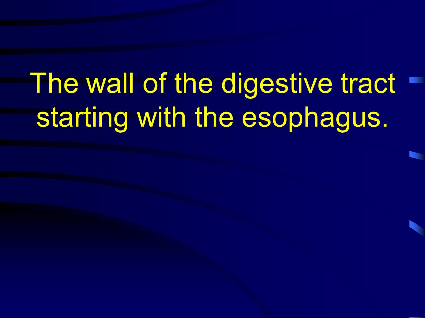 The wall of the digestive tract starting with the esophagus.