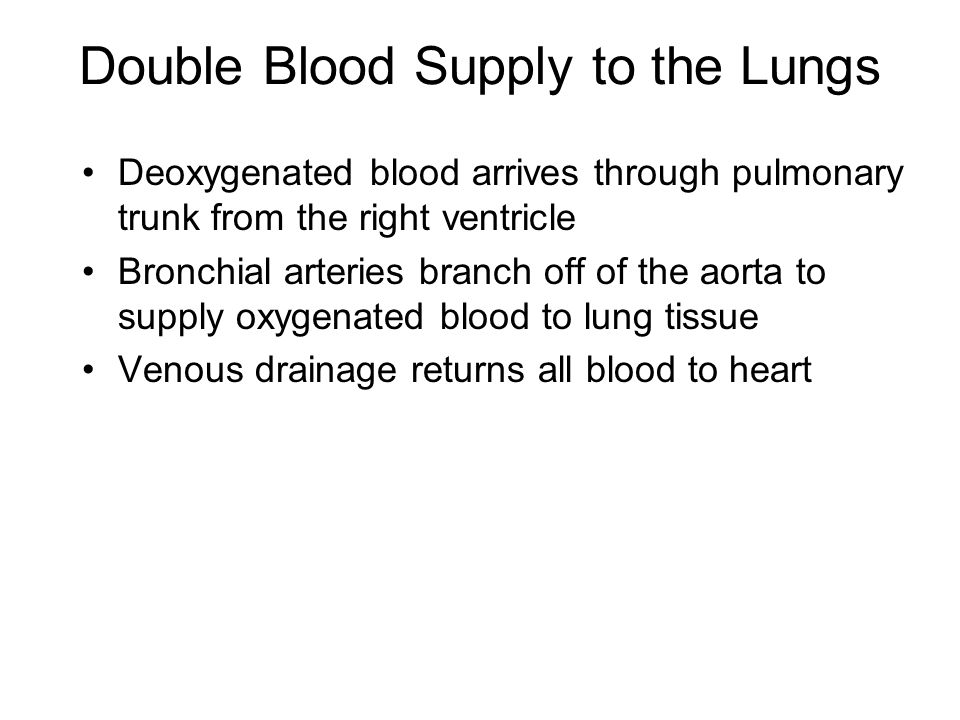 Double Blood Supply to the Lungs