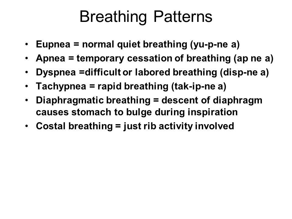 Breathing Patterns Eupnea = normal quiet breathing (yu-p-ne a)