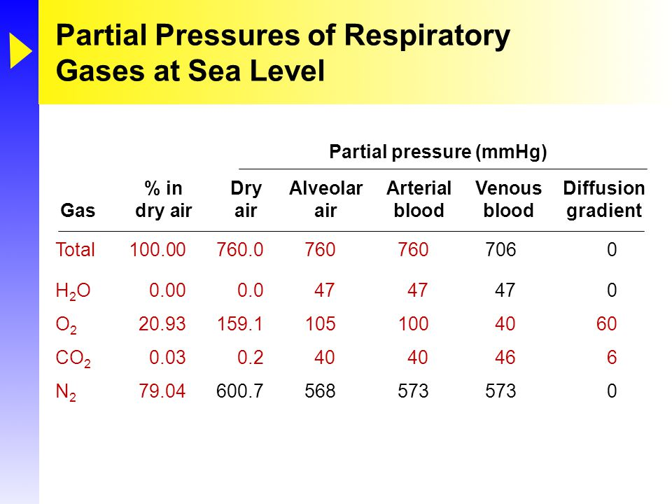 Partial Pressures of Respiratory Gases at Sea Level