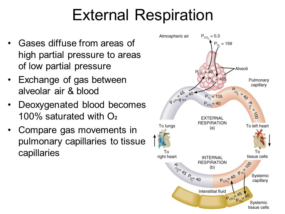 External Respiration Gases diffuse from areas of high partial pressure to areas of low partial pressure.