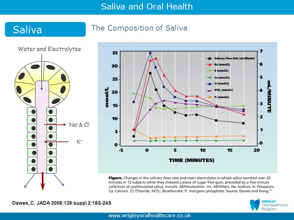 Saliva The Composition of Saliva Water and Electrolytes Na+& Cl- K+