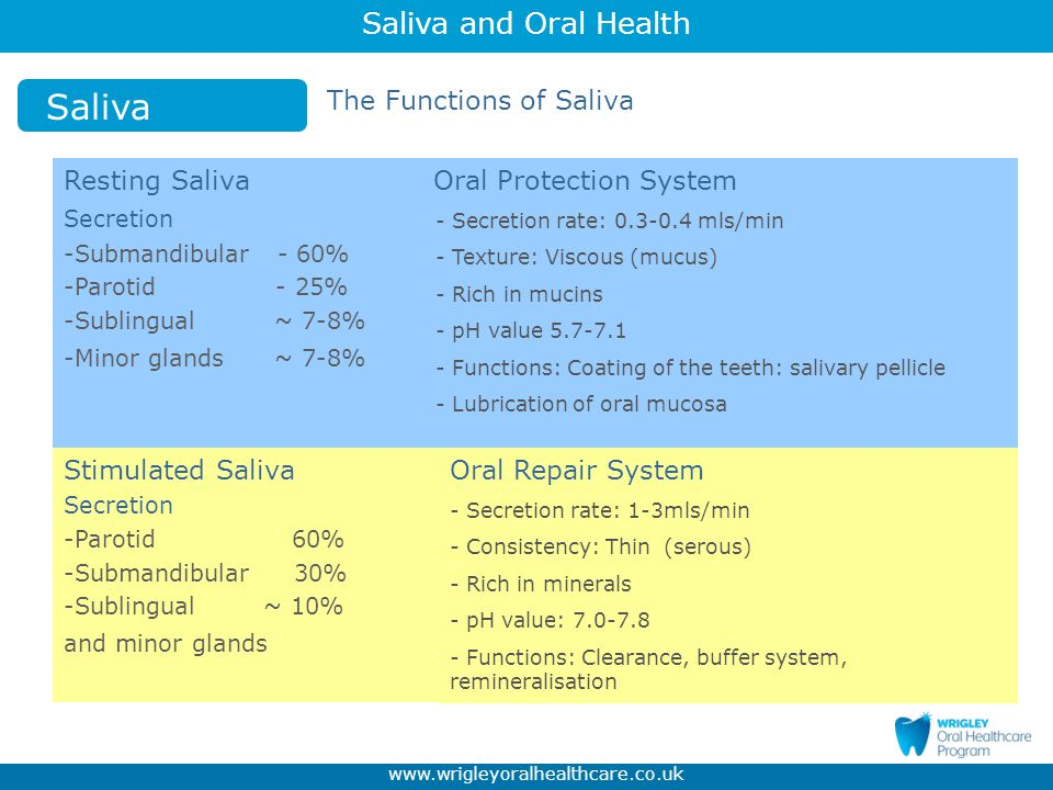Saliva The Functions of Saliva Resting Saliva Oral Protection System