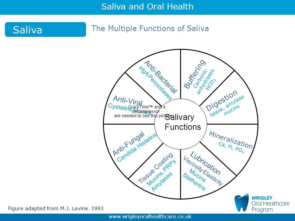 Saliva Salivary Functions The Multiple Functions of Saliva Buffering