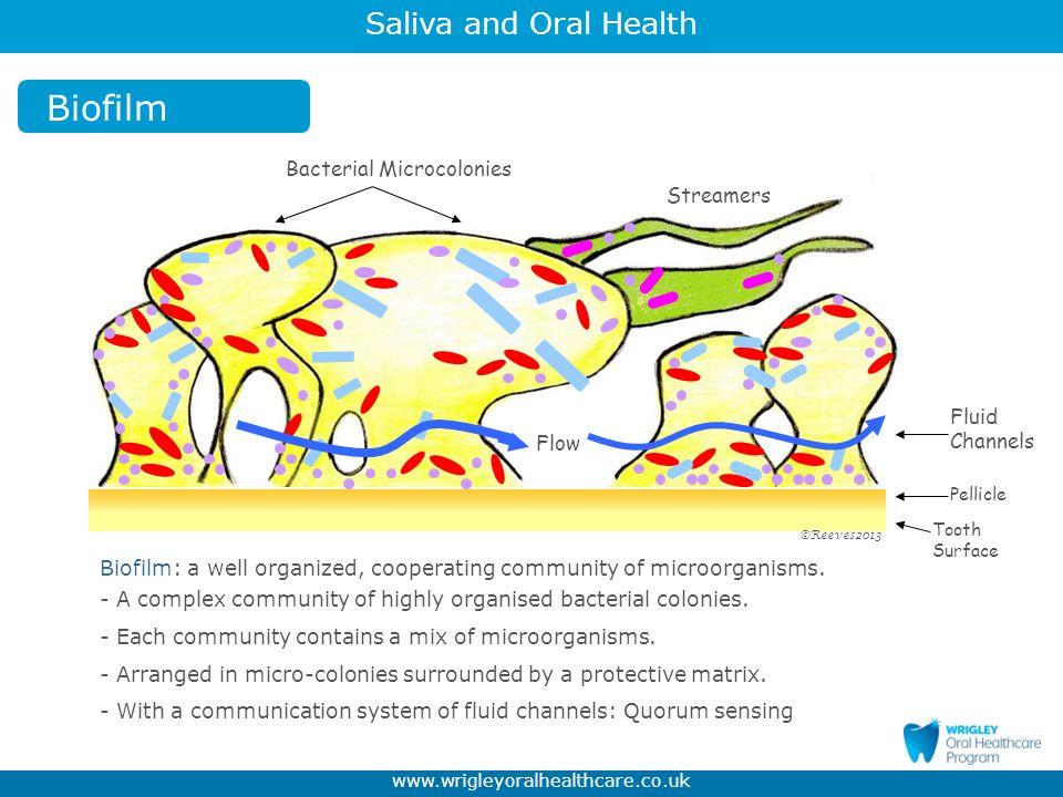 Biofilm Bacterial Microcolonies Streamers Fluid Channels Flow