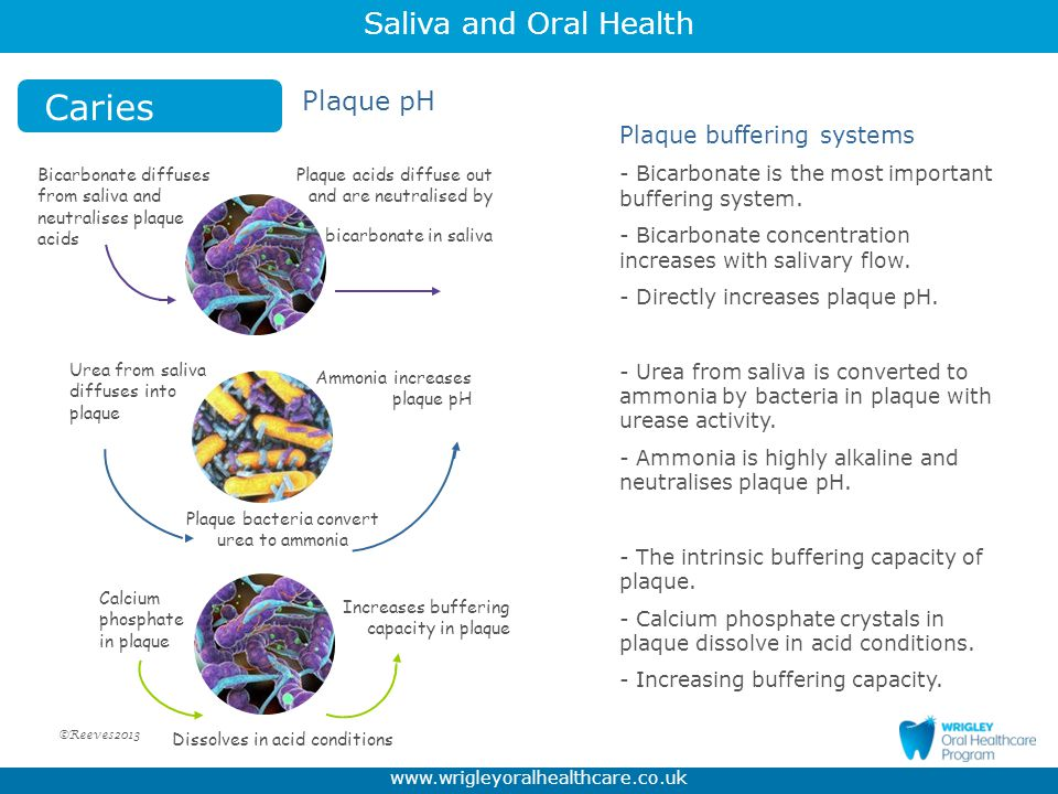 Caries Plaque pH Plaque buffering systems