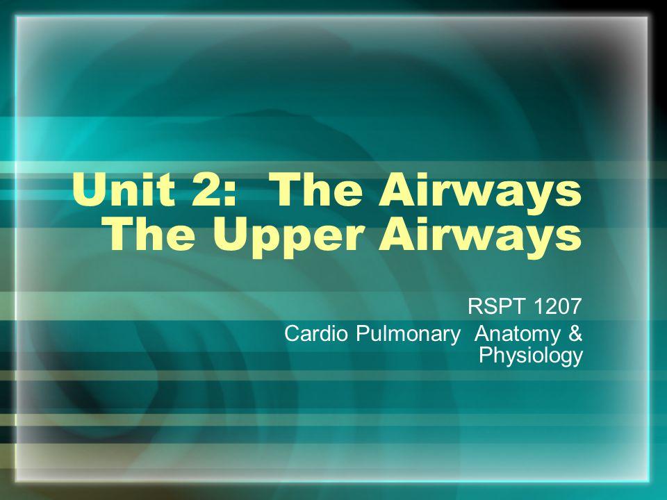 Unit 2: The Airways The Upper Airways