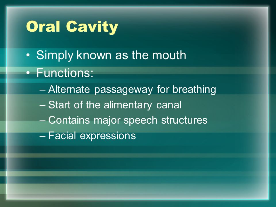 Oral Cavity Simply known as the mouth Functions: