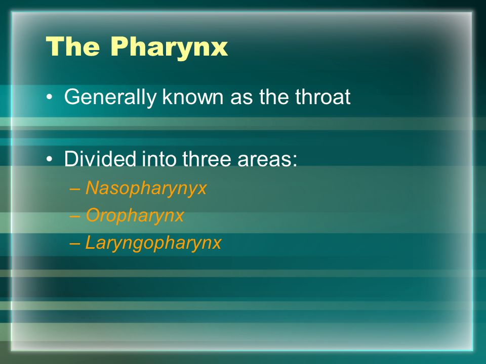 The Pharynx Generally known as the throat Divided into three areas: