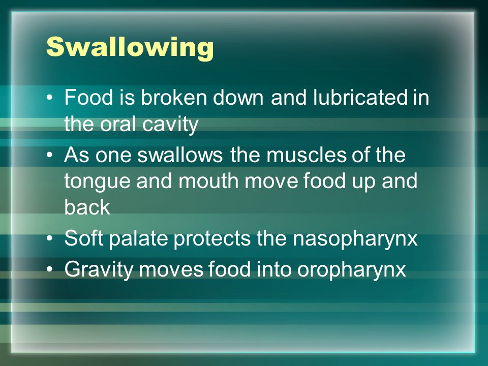 Swallowing Food is broken down and lubricated in the oral cavity