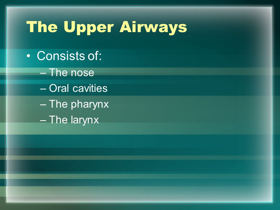 The Upper Airways Consists of: The nose Oral cavities The pharynx