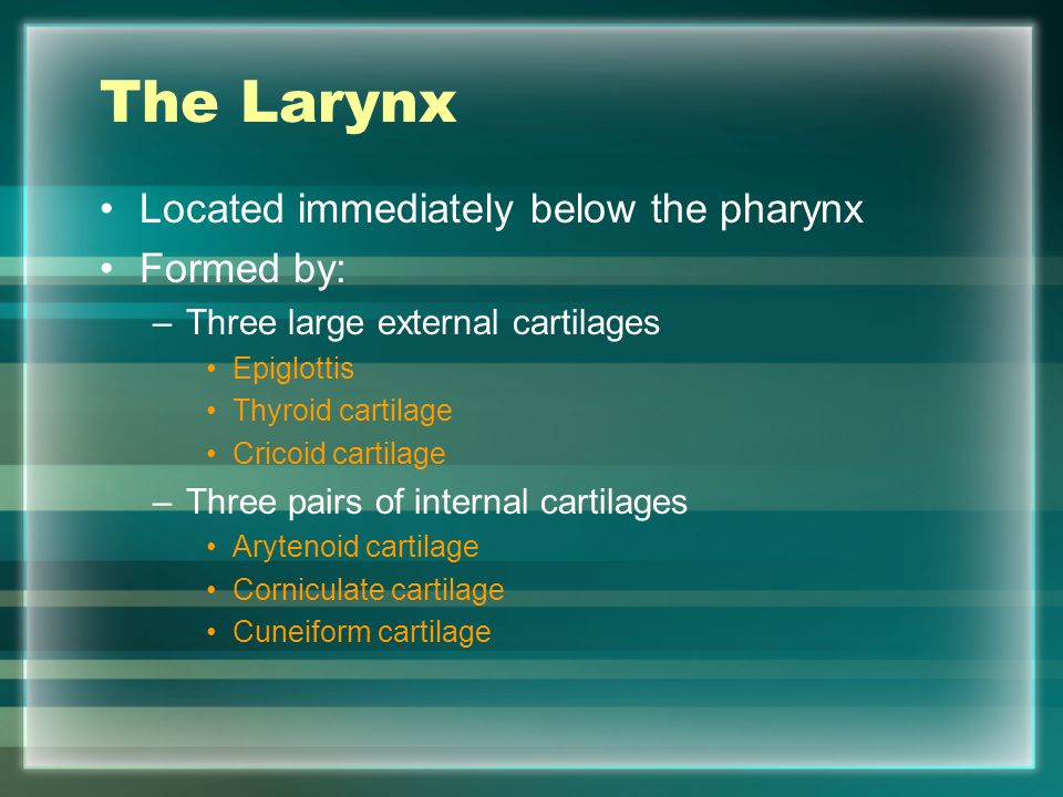 The Larynx Located immediately below the pharynx Formed by: