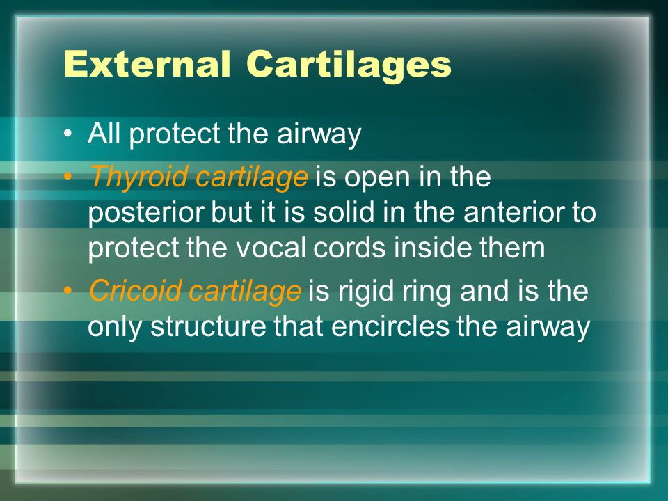 External Cartilages All protect the airway