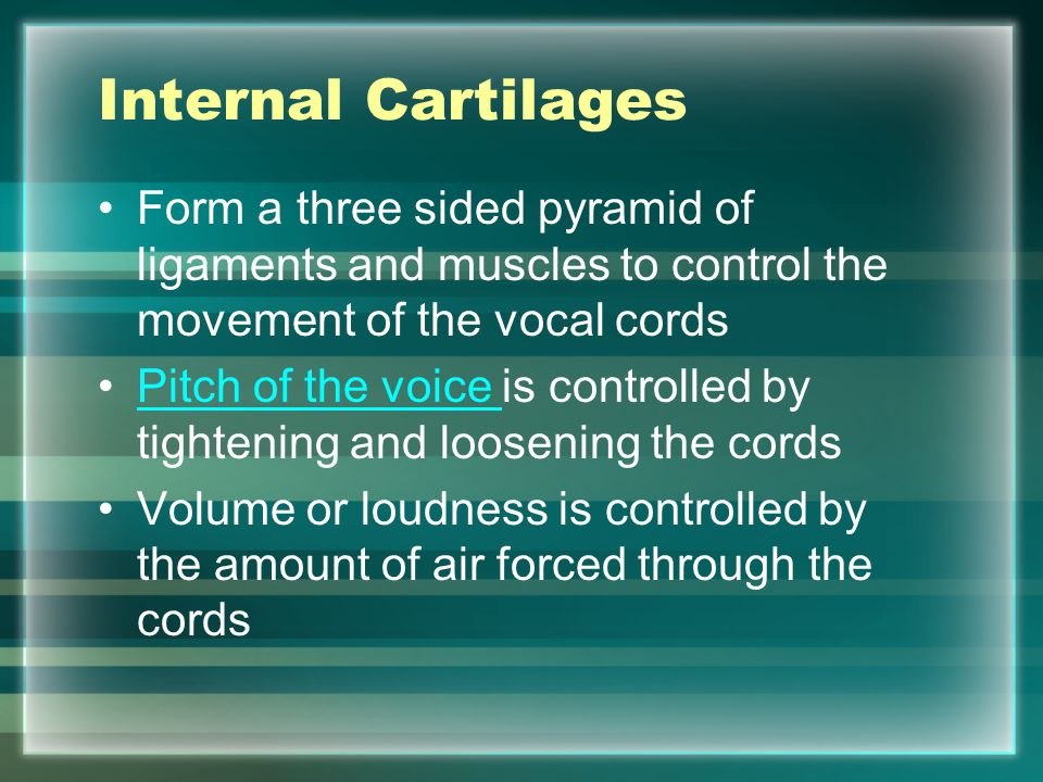 Internal Cartilages Form a three sided pyramid of ligaments and muscles to control the movement of the vocal cords.