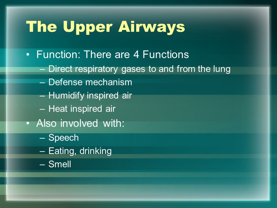 The Upper Airways Function: There are 4 Functions Also involved with: