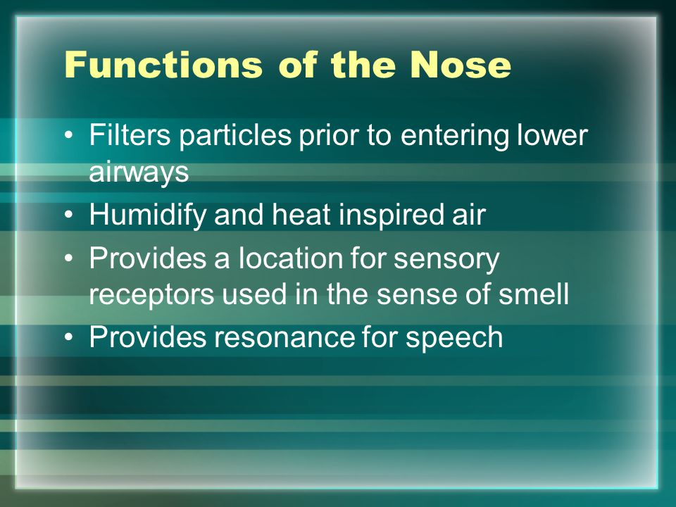 Functions of the Nose Filters particles prior to entering lower airways. Humidify and heat inspired air.