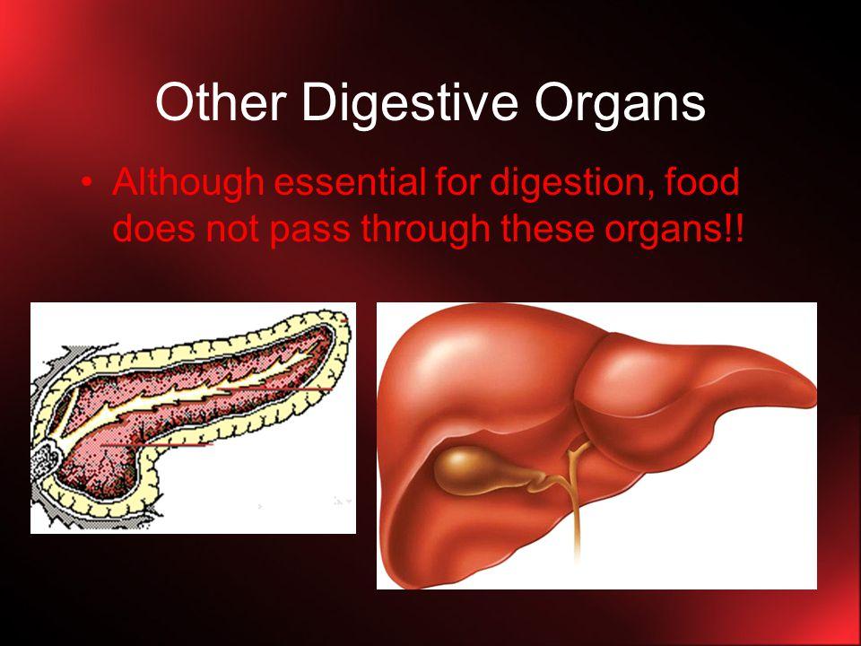 Other Digestive Organs
