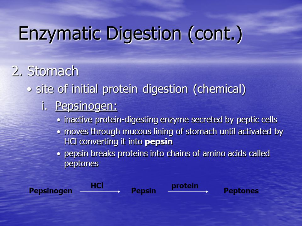 Enzymatic Digestion (cont.)