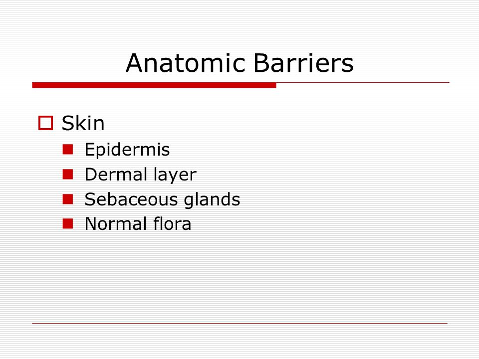 Anatomic Barriers Skin Epidermis Dermal layer Sebaceous glands