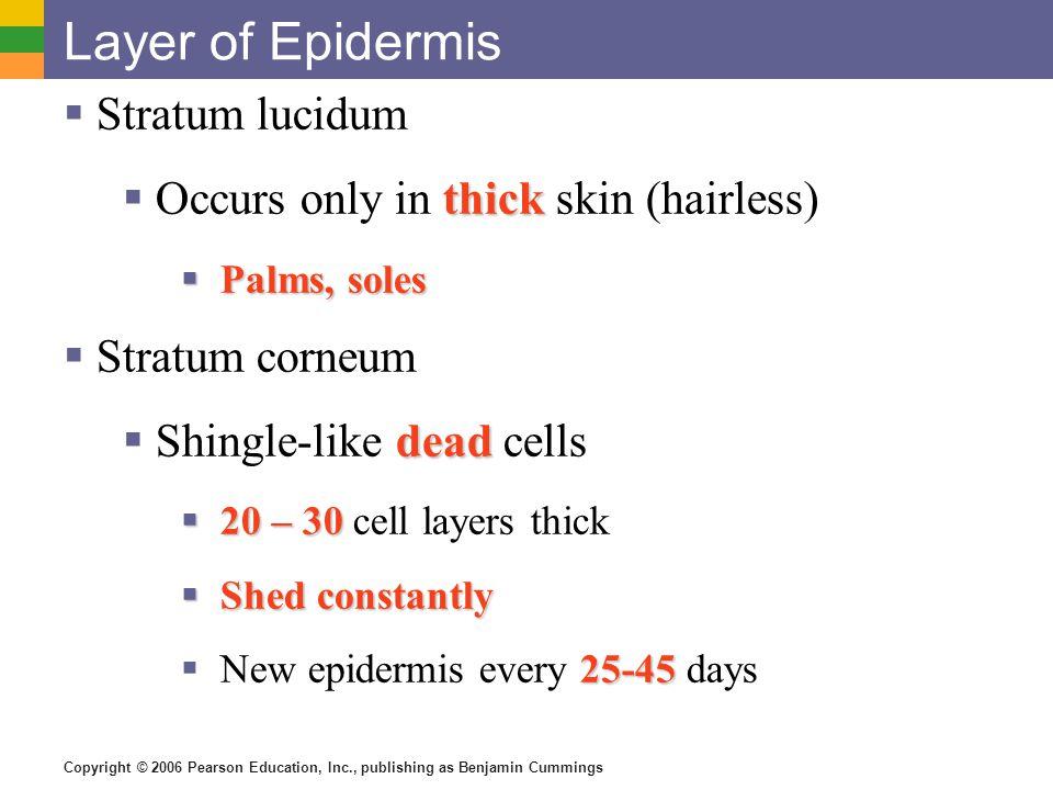 Layer of Epidermis Stratum lucidum