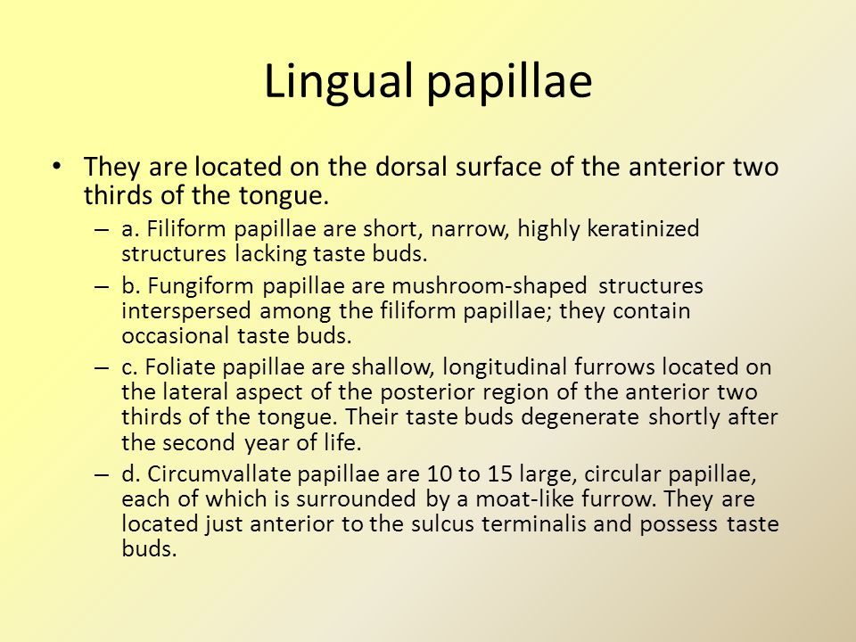 Lingual papillae They are located on the dorsal surface of the anterior two thirds of the tongue.