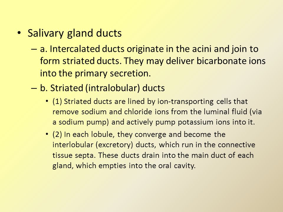 Salivary gland ducts