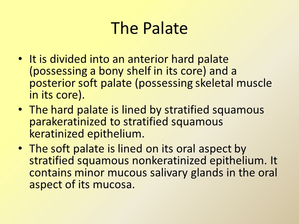 The Palate