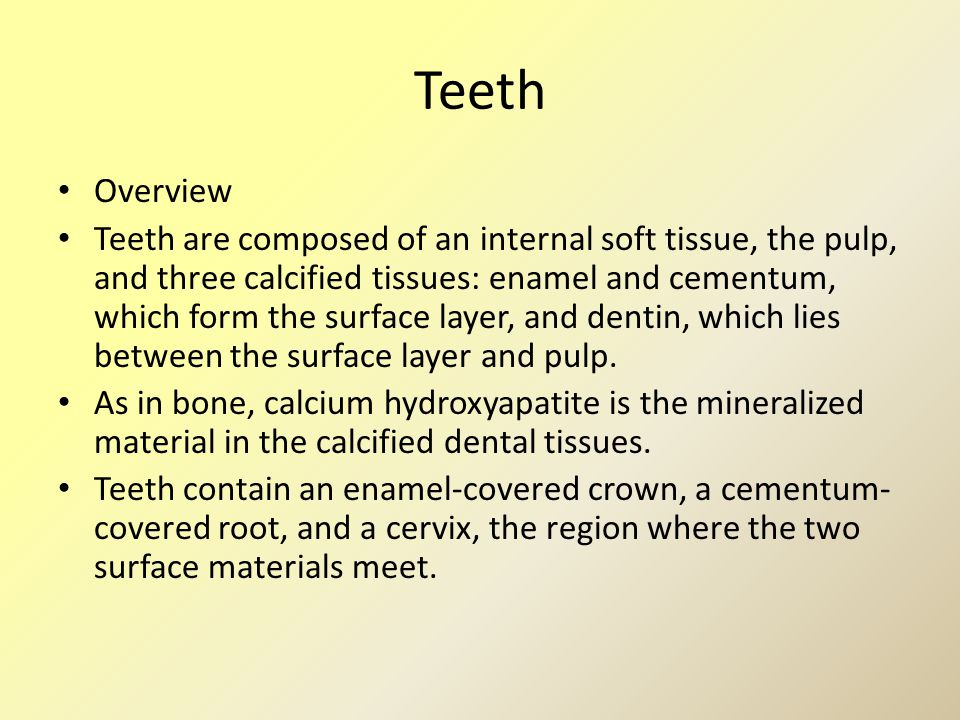 Teeth Overview.
