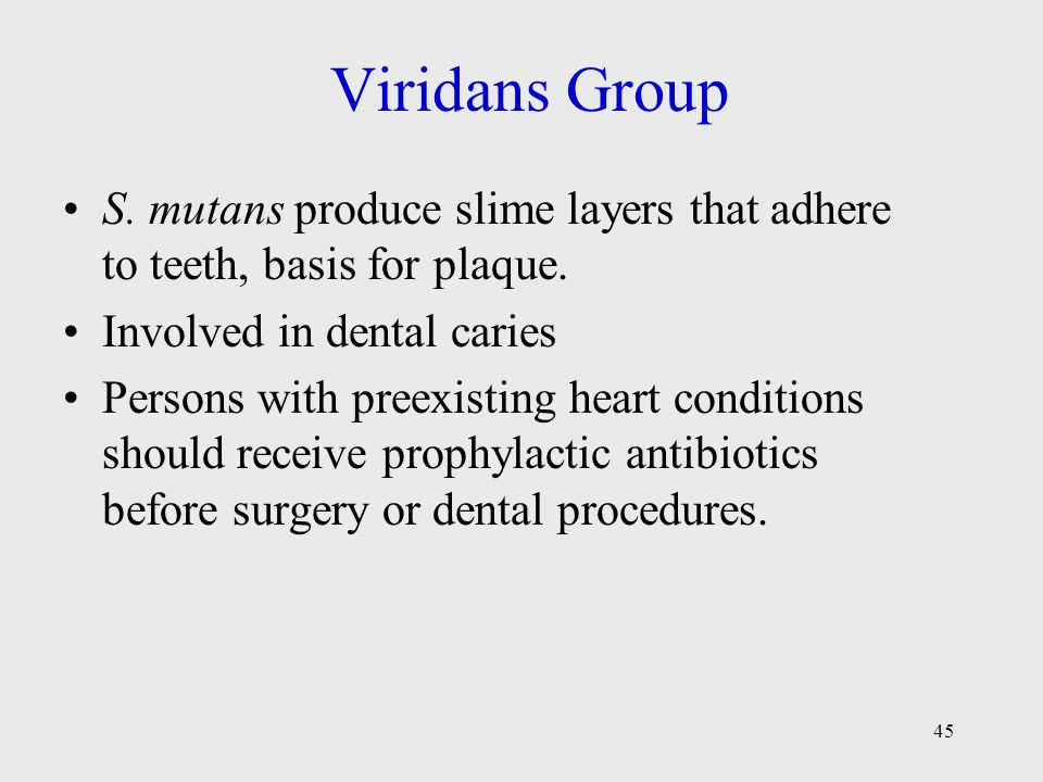 Viridans Group S. mutans produce slime layers that adhere to teeth, basis for plaque. Involved in dental caries.