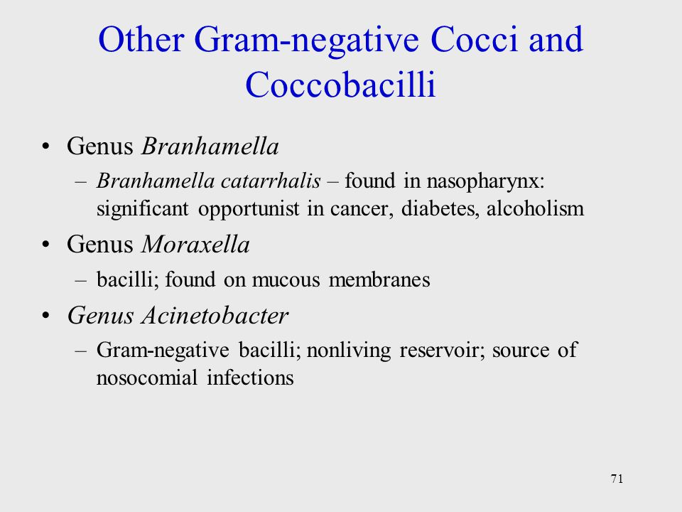 Other Gram-negative Cocci and Coccobacilli