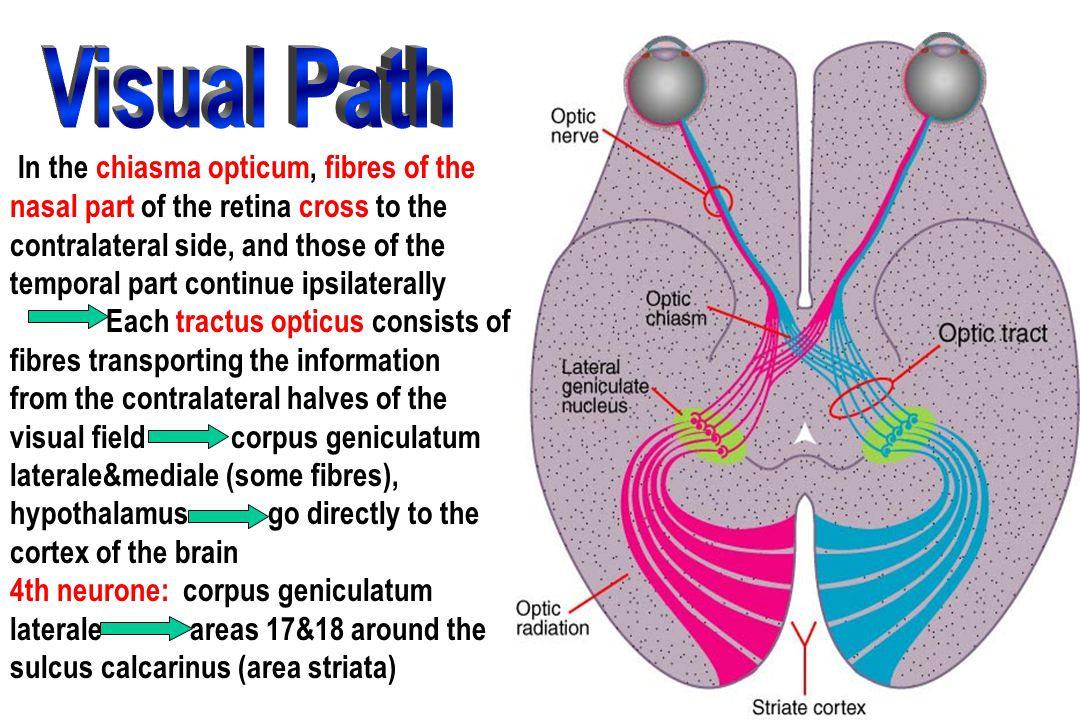 Visual Path