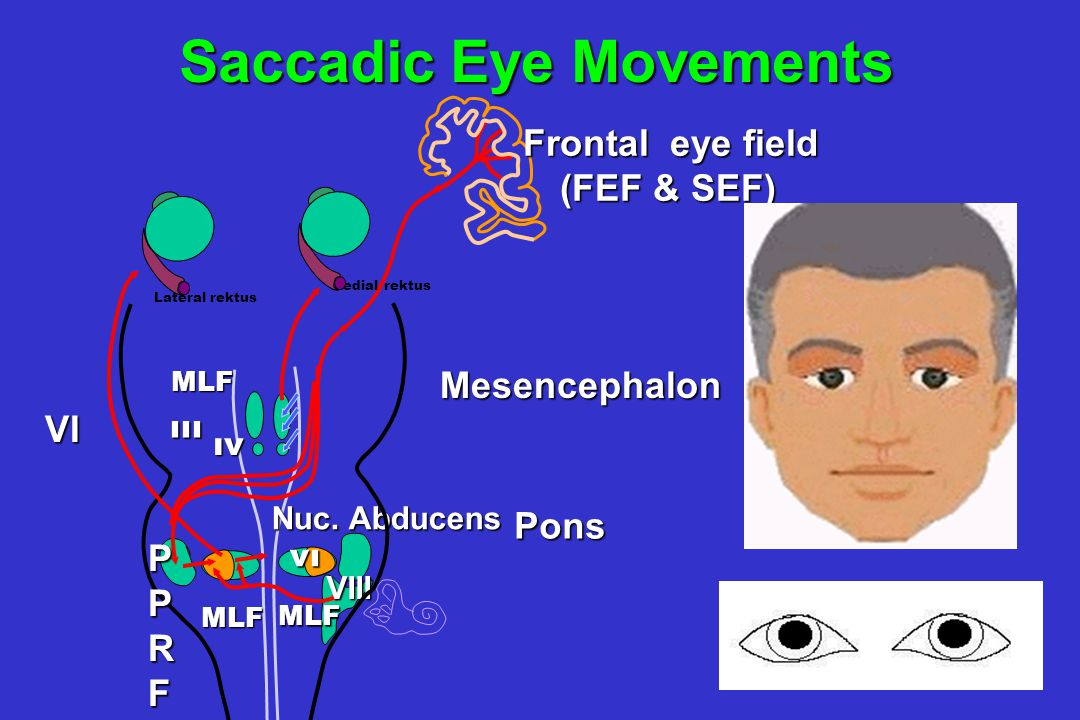 Saccadic Eye Movements