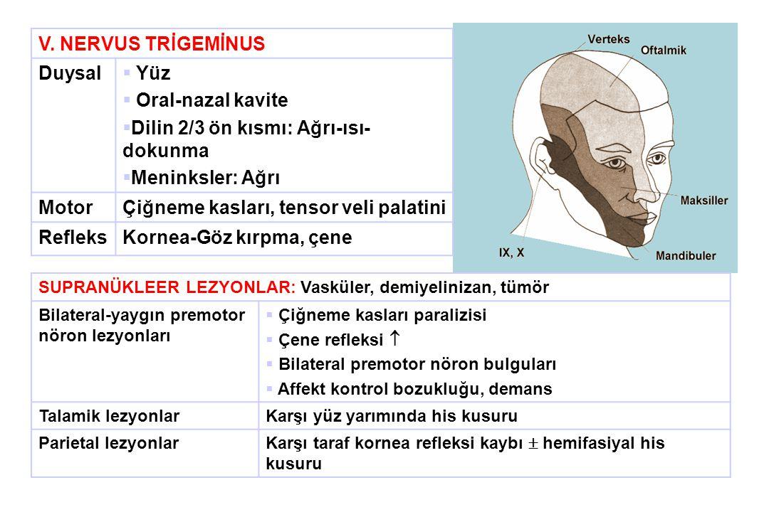 Dilin 2/3 ön kısmı: Ağrı-ısı-dokunma Meninksler: Ağrı Motor