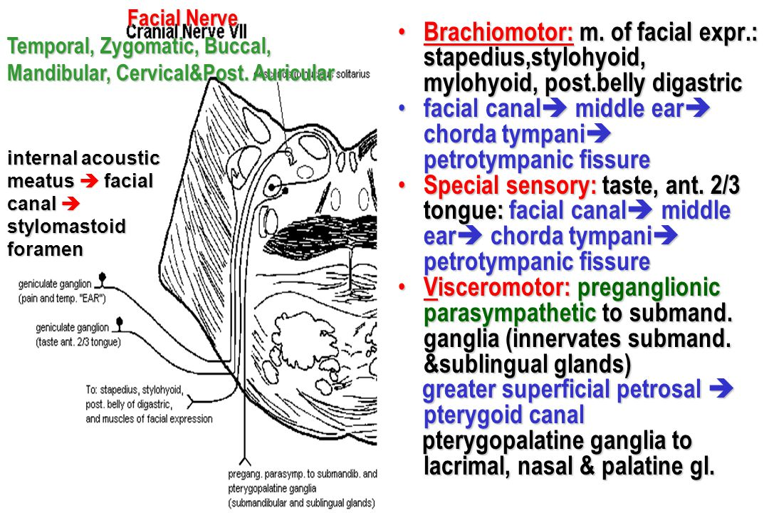 facial canal middle ear chorda tympani petrotympanic fissure