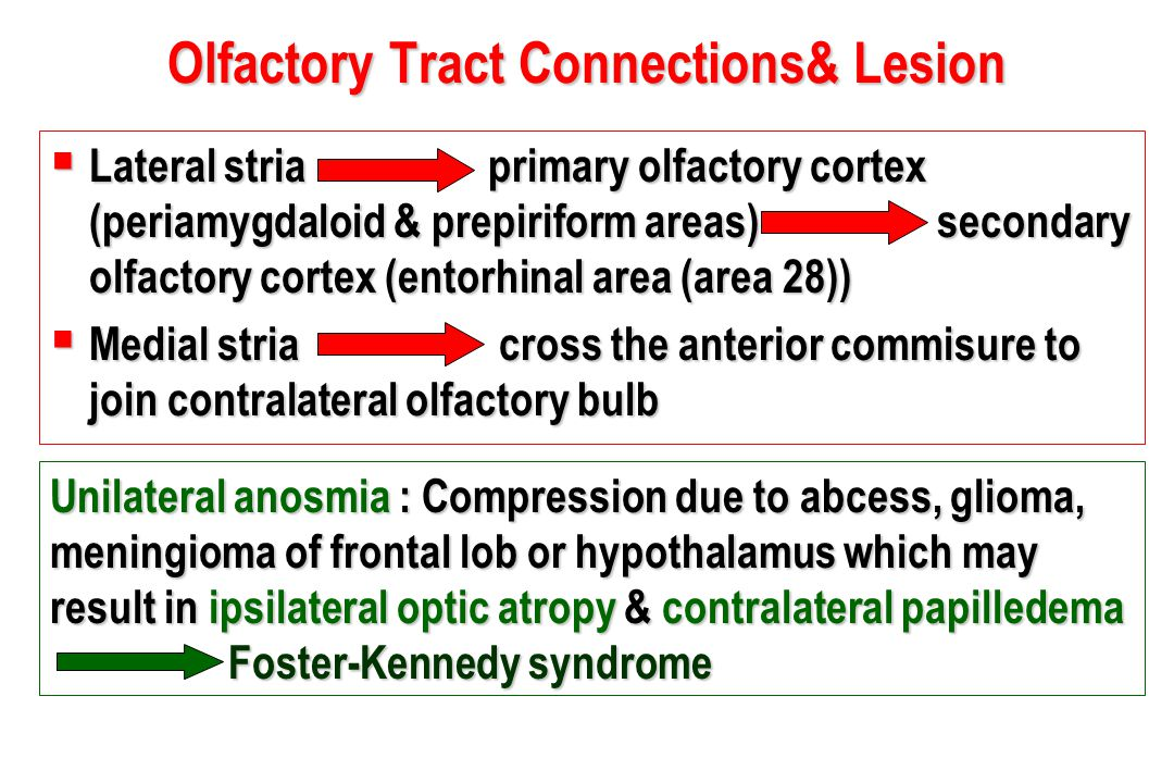 Olfactory Tract Connections& Lesion