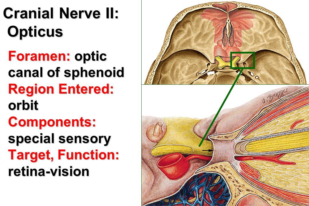 Cranial Nerve II: Opticus
