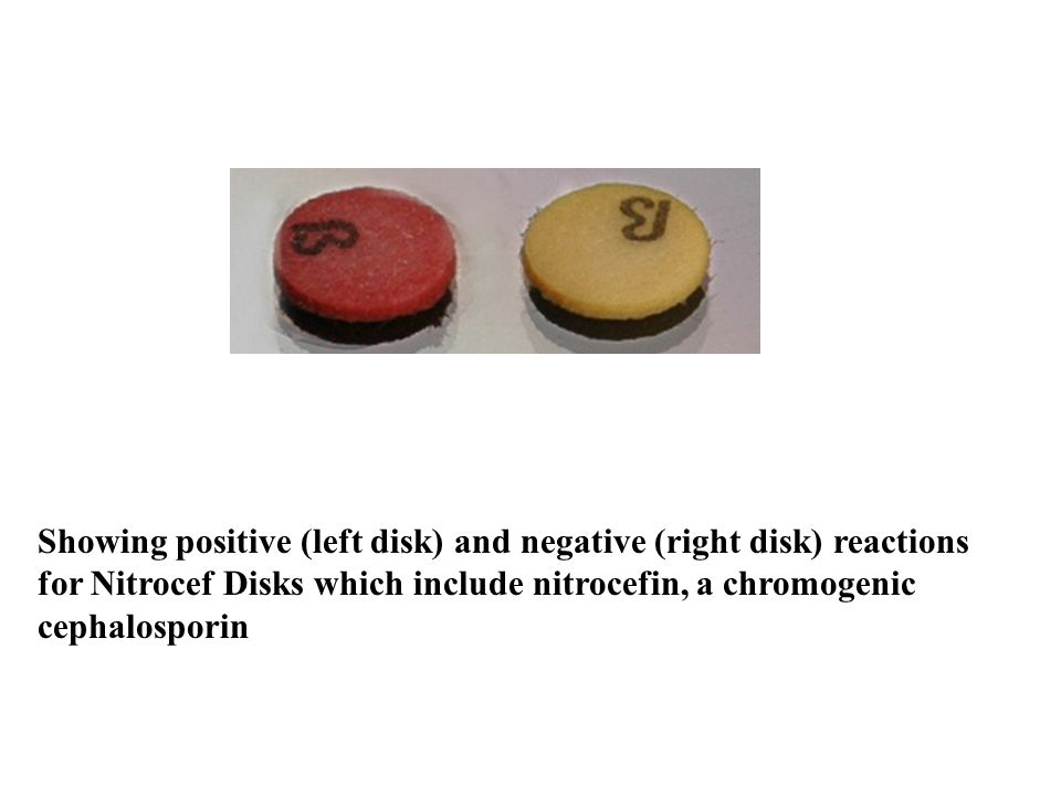 Showing positive (left disk) and negative (right disk) reactions for Nitrocef Disks which include nitrocefin, a chromogenic cephalosporin