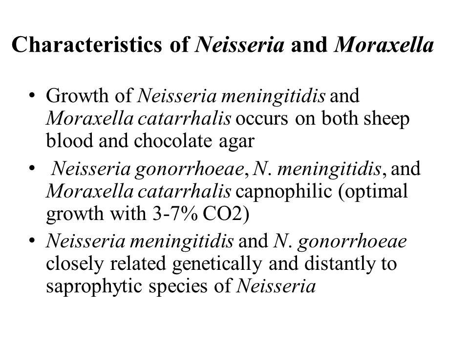 Characteristics of Neisseria and Moraxella