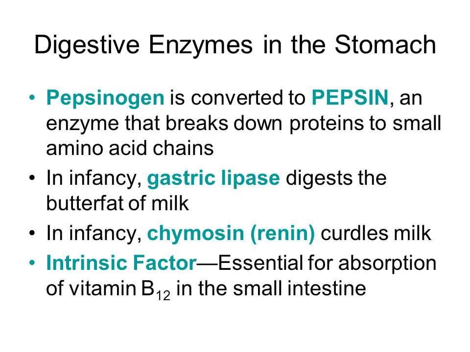 Digestive Enzymes in the Stomach
