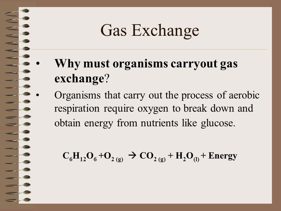 C6H12O6 +O2 (g)  CO2 (g) + H2O(l) + Energy