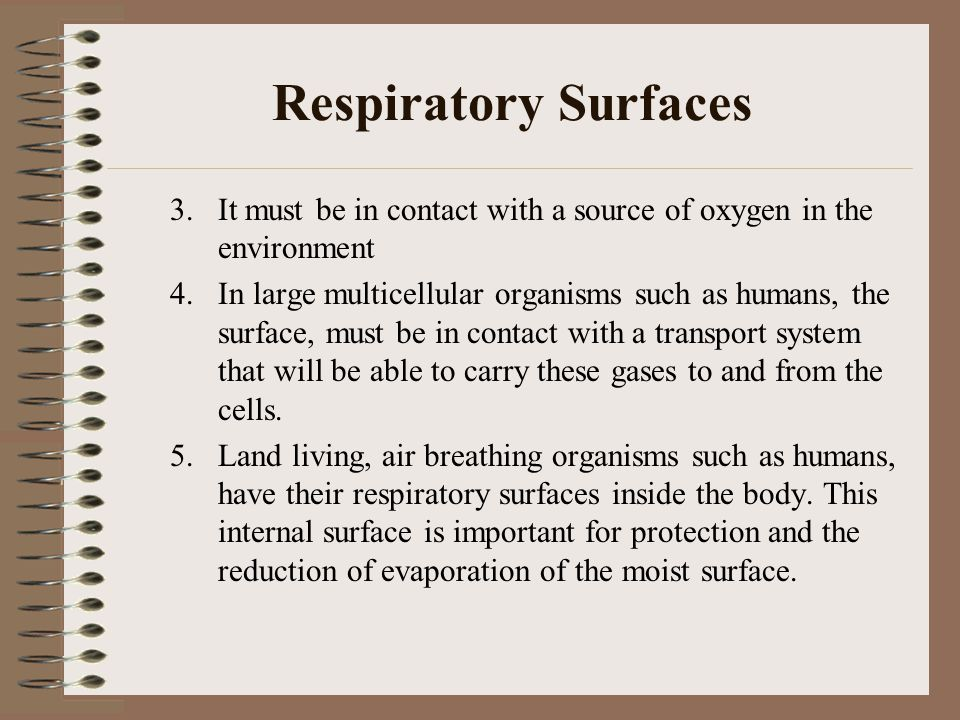 Respiratory Surfaces 3. It must be in contact with a source of oxygen in the environment.