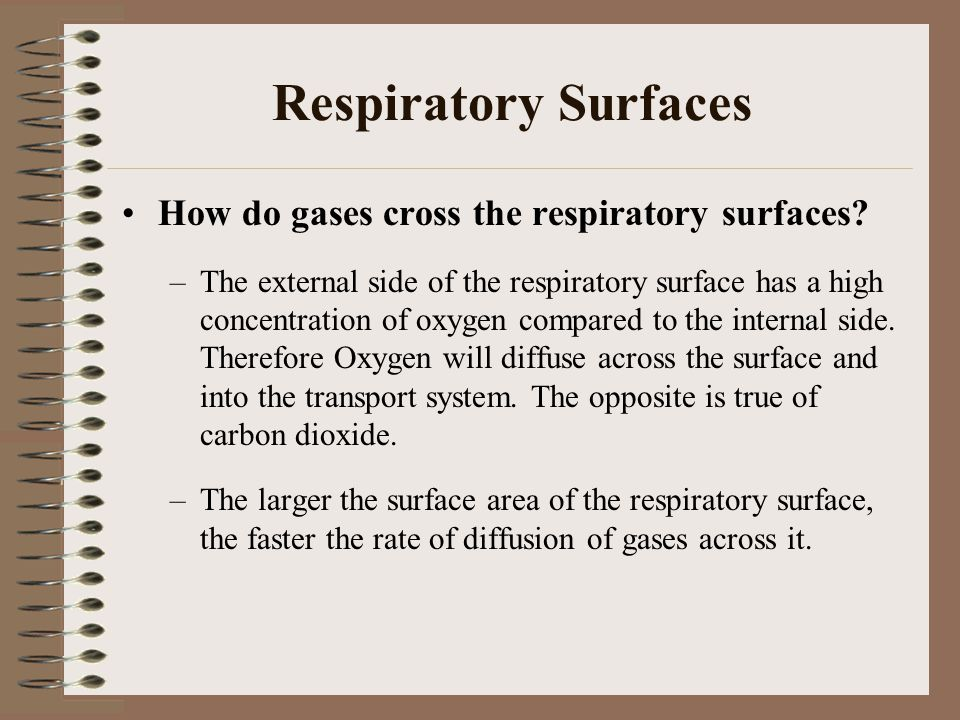Respiratory Surfaces How do gases cross the respiratory surfaces